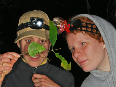 Two students from the Tropical Biology Association examining a juvenile male Usambara three-horned chameleon as part of an animal census techniques lab. Image courtesy of James Vonesh, Ph.D./VCU.